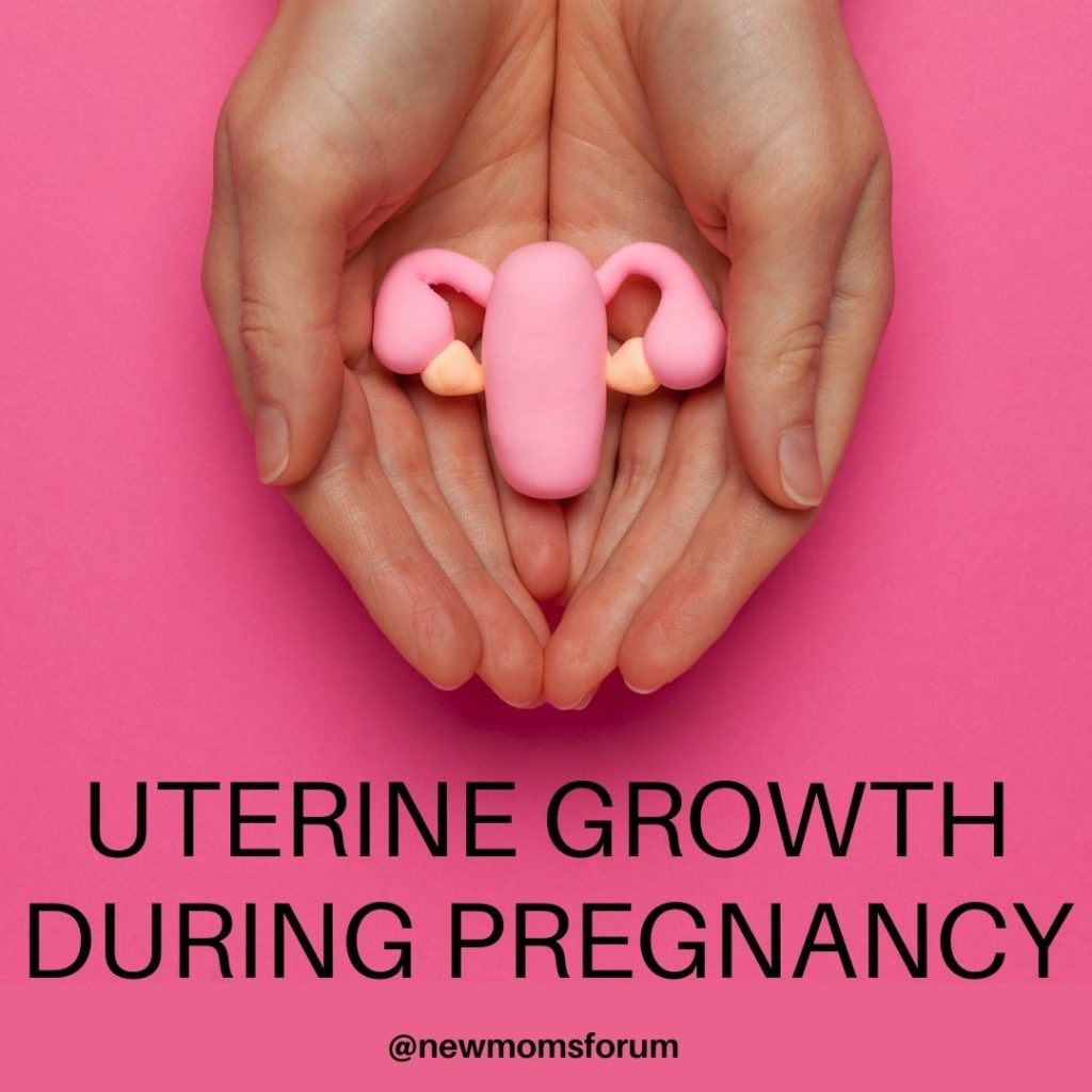 Uterine Growth During Pregnancy